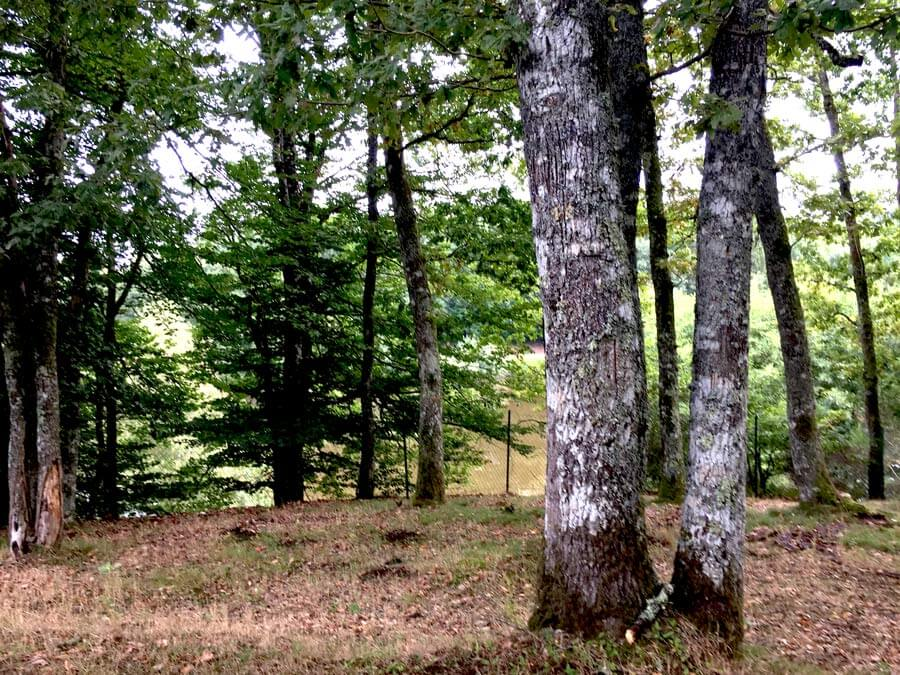 st-dizier-leyrenne-camping